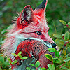 Secret red fox slide puzzle